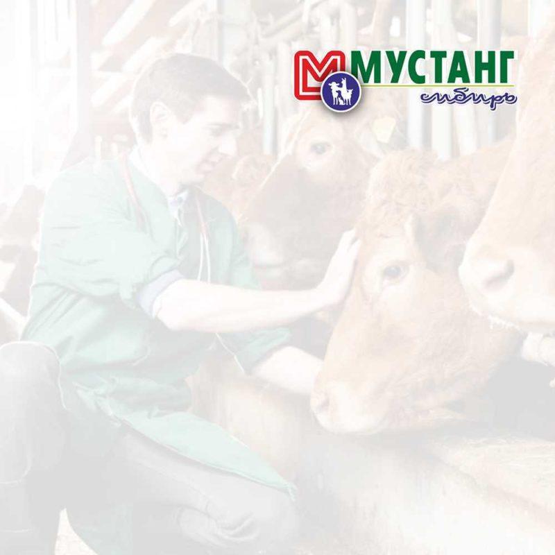 корма и кормовые добавки для сельхоз животных