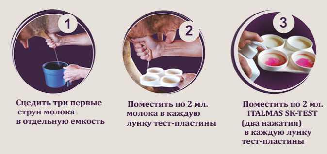Italmas SK-TEST