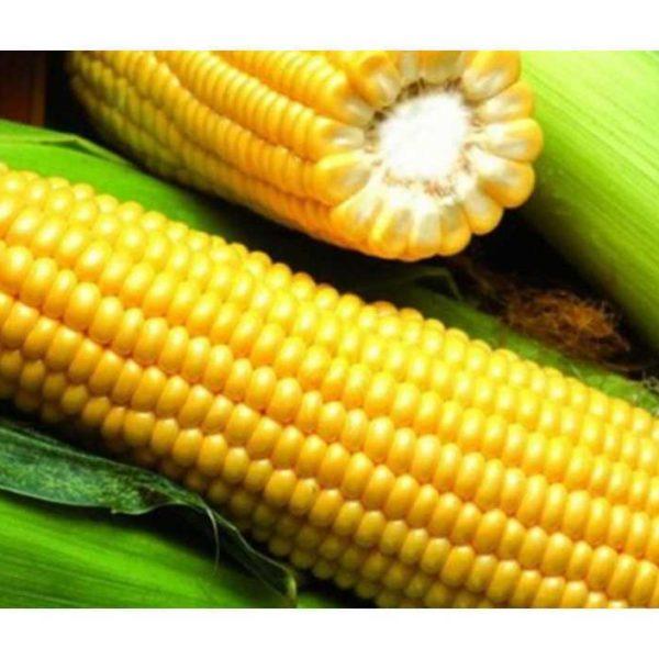 РОСС 130 МВ (Семена кукурузы)