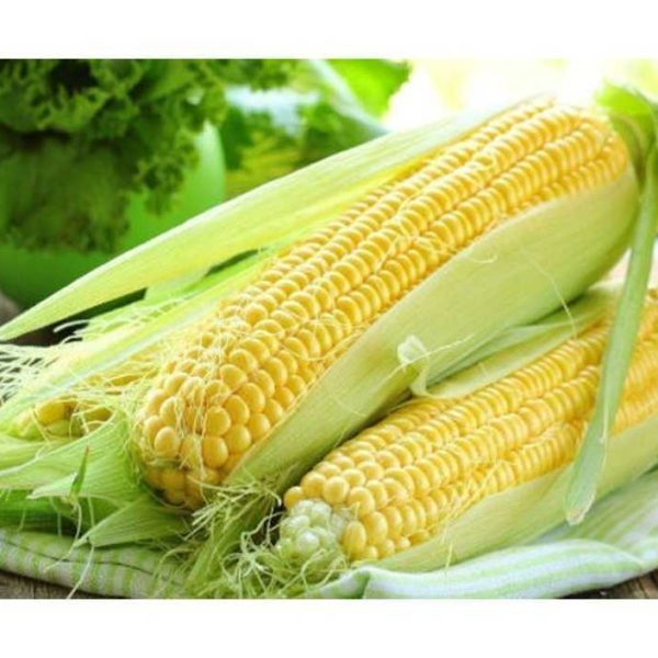 РОСС 140 МВ (Семена кукурузы)