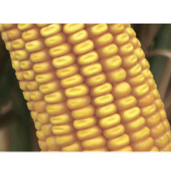 Труази КС (Семена Кукурузы)